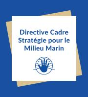 DCSMM - Plage de Pomègues - îles du Frioul